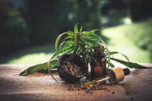 cbd plante adaptogène